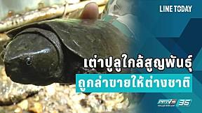 เต่าปูลูใกล้สูญพันธุ์ ถูกล่าขายให้ต่างชาติ