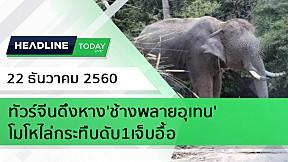 HEADLINE TODAY - ทัวร์จีนดึงหาง\'ช้างพลายอุเทน\' โมโหไล่กระทืบดับ1เจ็บอื้อ