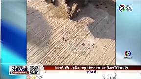 โพสต์คลิป สุนัขถูกทุบปางตายนำมาทิ้งหน้ารีสอร์ท | FlashNews | 13-01-62 | Ch3Thailand