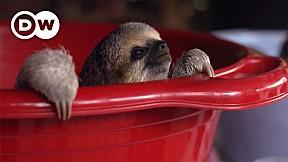 Going Wild EP.6 | Suriname | Sloths