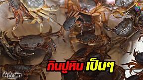 เปิบพิสดารกับเมนูสุดแปลก กินปูหินเป็นๆ จะอร่อยแค่ไหนมาดูกัน !!