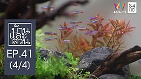 บ้านและสวน : ปลูกสวนในตู้(ปลา) l EP.41[4\/4]
