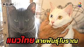 พาชมแหล่งรวบรวมแมวไทยสายพันธุ์โบราณ จะมีอะไรบ้างมาดูกัน!! l อึ้งทึ่งเสียว ช่อง8