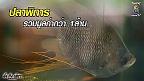 ปลาพิการ รวมกว่าล้านบาท เจ้าของลั่น มีเงินซื้อก็ไม่ขาย!!! | อึ้งทึ่งเสียว | ช่อง8