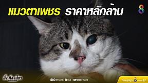 แมวตาเพชร ราคาหลักล้าน | อึ้งทึ่งเสียว | ช่อง8