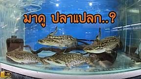 ตลาดปลาสวยงามที่ใหญ่ที่สุด ในอาเซี่ยน ตลาดปลาบ้านโป่ง ฟิชวิลเลจ