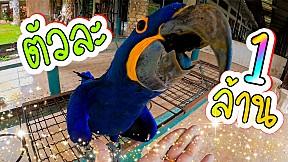 สถานที่อนุรักษ์ สายพันธุ์นกแก้ว แห่งเดียวในประเทศไทย