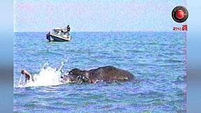 เรื่องจริงผ่านจอ   ช้างว่ายน้ำ