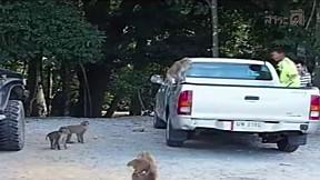 เรื่องจริงผ่านจอ | ถนนสังหารสัตว์ป่าเขาใหญ่
