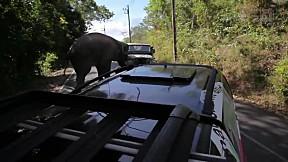 เรื่องจริงผ่านจอ | ศึกชนช้างเขาใหญ่