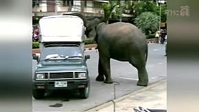 เรื่องจริงผ่านจอ | ช้างกระทืบคน