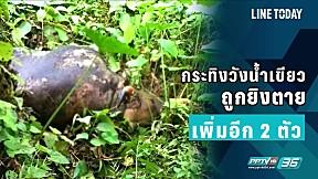 กระทิงวังน้ำเขียว ถูกยิงตายเพิ่มอีก 2 ตัว