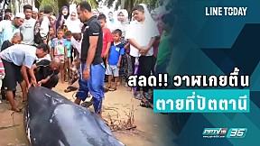 สลด!! วาฬเกยตื้นตายที่ปัตตานี