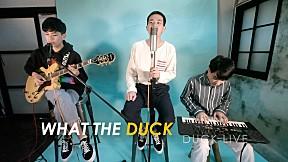mints - Duck Live 37 - พร้อม - mints (Special Session)