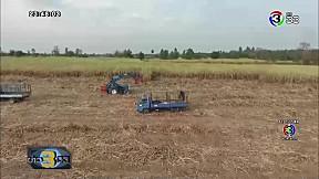 ทางเลือกเกษตรไร่อ้อย   ข่าว 3 มิติ   13-02-62   Ch3Thailand