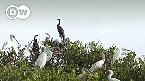 Going Wild EP.8 | Mauretania | Diawling National Park