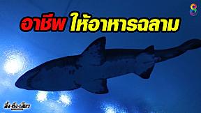 อาชีพสุดทึ่ง !! ดำน้ำให้อาหารฉลาม นักล่าสุดโหดแห่งท้องทะเล !!