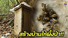 ถึงกับอึ้ง!! ชาวบ้าน จ.เชียงราย สร้างบ้านให้ผึ้งป่ามากกว่า 500 หลัง!! l อึ้งทึ่งเสียว l ช่อง8