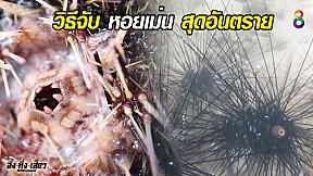 วิธีจับ หอยเม่น สุดอันตราย | อึ้งทึ่งเสียว | ช่อง8