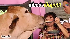 ทึ่ง!! บ้านนี้เลี้ยงวัวเหมือนลูกคน!!   อึ้งทึ่งเสียว   ช่อง8