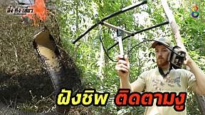 ทึ่ง!! นักวิจัยงูต่างชาติฝังชิพติดตามวิจัยงูในประเทศไทย!!