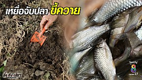 สุดทึ่ง!! นำขี้ควายไปทำเหยื่อเพื่อดักจับปลา ได้ผลดีมากๆ | อึ้งทึ่งเสียว | ช่อง8