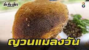 นักล่าญวณแมลงวัน! | อึ้งทึ่งเสียว | ช่อง8
