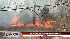 ไฟป่าเขาใหญ่ลุกลามต่อเนื่องกระทบสัตว์ป่า | FlashNews | 23-02-63 | Ch3Thailand