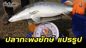 ปลากะพงยักษ์แปรรูป! | อึ้งทึ่งเสียว | ช่อง8