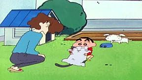 ชินจังจอมแก่น | EP.256 ตอน ฮาเตนะเป็นแมวปริศนา