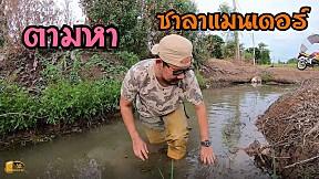 ตามหาเจ้า ซาลาแมนเดอร์ Salamander