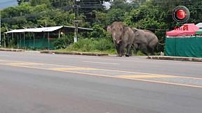 เรื่องจริงผ่านจอ | ช้างบุกบ้านป่าละอู